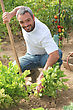 Man Tending To His Garden stock image