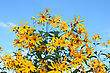 Many Beautiful Yellow Colors Against The Blue Sky In The Summer stock photography