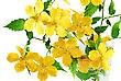 Perennial Marsh Marigold Yellow Wildflowers In Vase On White Background stock image