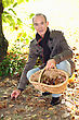 Mature Man Picking Chestnuts. stock image