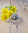Metal Sieve With Elecampane Root, Fresh Yellow Flowers Elecampane On Background Of Wooden Boards stock image