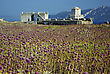 Methoni Castle At Sunny Summer Day, Purple Weed In Foreground, Blurred Hills In Background