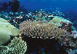 deepsea corals reef underwater fish ocean stock photo