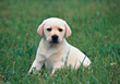 dogs pet puppy mammal animal stock image