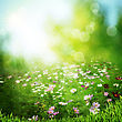 Misty Meadow On The Early Morning. Abstract Natural Backgrounds