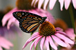 Delicate Monarch Butterfly on Pink Flower stock image