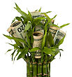 Leafage Money Growing Concept. Money Banknotes Growing In Flowerpot Isolated On White Background stock image