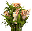 Leafage Money Growing Concept. Money Banknotes Growing In Flowerpot Isolated On White Background stock photography