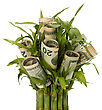 Money Growing Concept. Money Banknotes Growing In Flowerpot Isolated On White Background stock photo