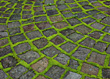 Moss Growing Between Cobblestone Pavers stock photo