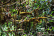 Moss On The Rhododendron Branches, Nepalese Forest stock image