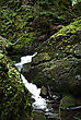 Mountain Stream Flowing Through Moss Covered Rocks In The Forest