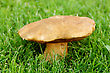 Mushroom In A Grass On Isolated.