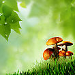 Mushrooms. Abstract Natural Backgrounds