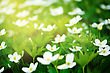 Nature Background With Little White Flowers And Sun Beams stock photography