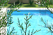 Nice Swimming Pool And Pine Branches stock image