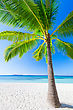 Palmtrees Nobody On The Beauty Beach With Turquoise Water stock photo