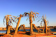 Old Dead Palm Trees On The Shore Of The Beach stock photo