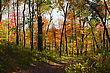 An Old Forest Road Leads Into The Fall Foliage stock image