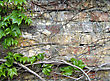 Old Grunge Brick Wall With Green Leaves Decoration stock photo