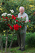 Old Man - Grower Of Roses Next To Rose Bush In His Beautiful Garden