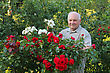 Old Man - Grower Of Roses Next To Rose Bush In His Beautiful Garden stock image