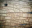 Surface Old Painted Cracked Peeling Wood Texture, Close-up stock photography