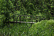 Old Primitive Wooden Bridge On Footpath Trough Wild Forest At Summer Sunny Day stock photo