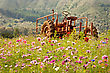 Old Rusty Tractor Parked In A Filed Of Wildflowers stock photography