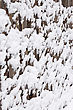 Old Wooden Fence, Covered With Snow stock image