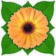 One Orange Flower With Green Leaf Close-up Studio Photography