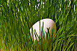 One White Egg On Green Grass Bush stock photo