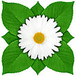One White Flower With Green Leaf Close-up Studio Photography stock photography