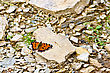 Orange Butterfly On A Stone On A Background Of Rubble stock image