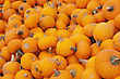 Orange Pumpkins Piled Up For Sale stock photo
