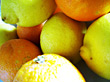 Oranges & Lemons stock image