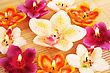 Orchid Candles On Bamboo Background. stock photo