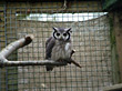 Owl In Cage stock photography
