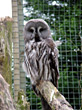 Owl In Zoo Cage stock photo