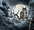 Owl Perching On A Tree Against The Moon stock photography