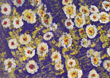 Painting of Daisies stock photography