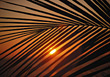 Palm Leaf with Sunset stock image