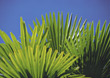 Palm Leafs stock photography