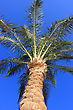 South Palm Tree At Sunset Light stock photography