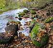 Moss Panorama Of A Wild River, Autumn In A National Park Of A Lithuania stock photo