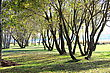 Park with trees on the river bank in Latvia stock photo