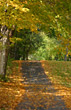 Sunny Path in the Fall stock photo