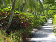 Path through Tropical Landscaping