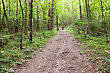 Pathway And Forest Trees. Nature Green Wood Backgrounds stock photography