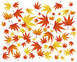 Pattern Of Autumn Maples Leaves.